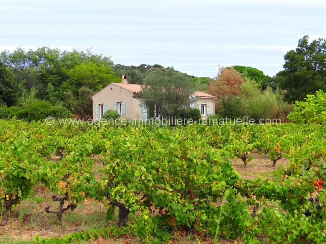 Terrain dans les vignes, Ramatuelle